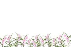 Fiore rosa e piccolo albero su fondo bianco, con il picchiettio del ritaglio fotografia stock