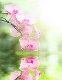 Orchidea nell acqua foto stock 96 orchidea nell acqua for Orchidea acqua