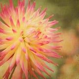 Fiore rosa ed arancio Fotografie Stock Libere da Diritti