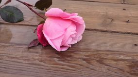 Fiore rosa in legno video d archivio