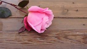 Fiore rosa in legno archivi video