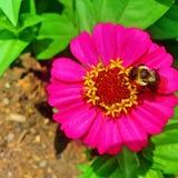 Fiore rosa perfetto fotografie stock