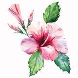 Fiore rosa-rosso tropicale di estate floreale meravigliosa tropicale di erbe verde dell'Hawai con i germogli e le foglie verdi royalty illustrazione gratis