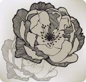 Fiore rosa selvaggio, a mano disegno Fotografie Stock