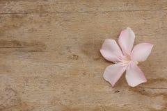 Fiore rosa su fondo di legno Immagini Stock Libere da Diritti