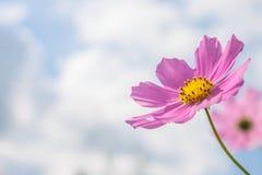 Fiore rosa sul cielo nuvoloso Immagine Stock Libera da Diritti