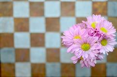 Fiore rosa sulla parete Fotografia Stock