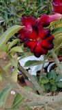 Fiore rossastro fotografia stock