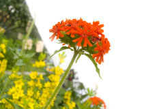 Fiore rosso fotografia stock