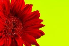 Fiore rosso Fotografie Stock