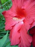 Fiore rosso immagini stock