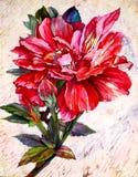 Fiore rosso illustrazione vettoriale