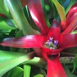 Fiore rosso 2 Fotografia Stock