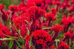 Fiore rosso bello fotografia stock