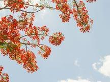 Fiore rosso con il cielo Fotografie Stock Libere da Diritti
