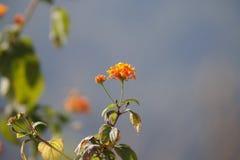 Fiore rosso con il fondo del cielo Fotografie Stock Libere da Diritti