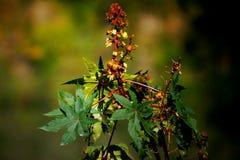 Fiore rosso con il fondo del cielo Fotografia Stock