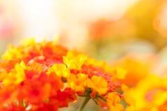 Fiore rosso con il fondo della sfuocatura Fotografie Stock