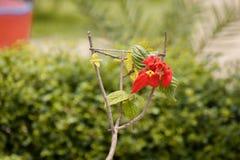 Fiore rosso con il labbro verde Fotografia Stock Libera da Diritti