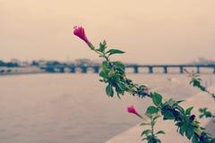 Fiore rosso con tonalità verde Fotografia Stock