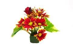 Fiore rosso del crisantemo del mazzo isolato Immagini Stock