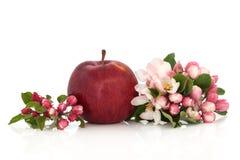 Fiore rosso del fiore e del Apple Fotografie Stock