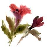 Fiore rosso del giglio dell'acquerello Fotografia Stock Libera da Diritti