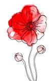 Fiore rosso del peony in acquerello Illustrazione di Stock