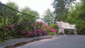 Fiore rosso del rododendro Il movimento della macchina fotografica permette di vedere il fiore da tutti i lati del fiore stock footage