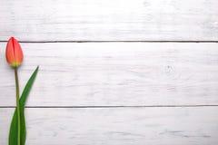Fiore rosso del tulipano su fondo di legno Vista superiore, spazio della copia Fotografie Stock