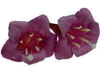 Fiore rosso del Weigela immagine stock