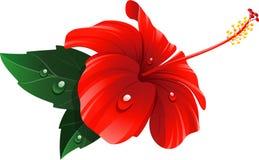 Fiore rosso dell'ibisco Fotografie Stock Libere da Diritti