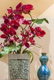 Fiore rosso dell'orchidea Fotografia Stock Libera da Diritti