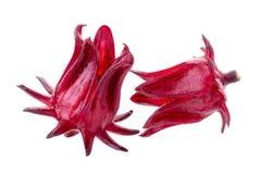 Fiore rosso della frutta di sabdariffa di Roselle Hibiscus su fondo bianco Fotografia Stock Libera da Diritti
