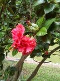 fiore rosso della natura fotografie stock