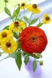 Fiore rosso di zinnia Fotografia Stock Libera da Diritti