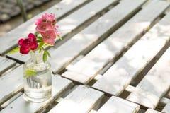 Fiore rosso e rosa Immagine Stock