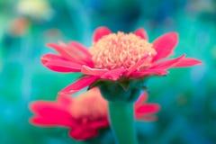 Fiore rosso nel giardino Fotografia Stock