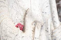 Fiore rosso nella mano di pietà Immagine Stock Libera da Diritti