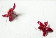 Fiore rosso su di legno Fotografia Stock