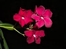 Fiore rosso sul giardino fotografia stock