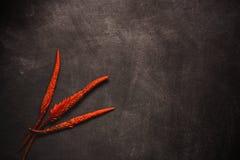 Fiore rosso tropicale Fotografia Stock