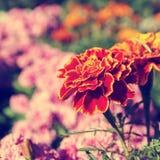 Fiore rosso in un giardino botanico fotografie stock