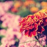 Fiore rosso in un giardino botanico immagini stock