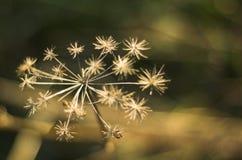Fiore sapless della foto Fotografia Stock Libera da Diritti
