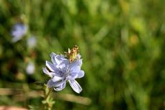 Fiore sbocciante immagini stock libere da diritti