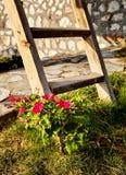 Fiore sbocciato e scala di legno Immagini Stock Libere da Diritti