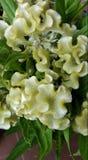 Fiore sconosciuto fotografie stock libere da diritti