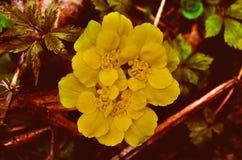 Fiore sconosciuto del terreno boscoso immagini stock