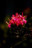 Fiore scuro Immagini Stock